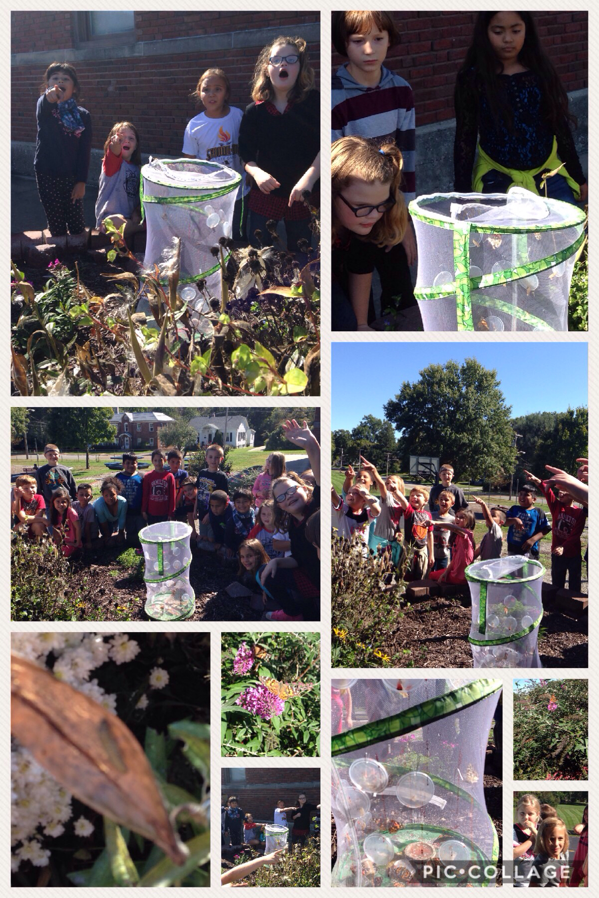 Third Graders Study Butterfly Life Cycle